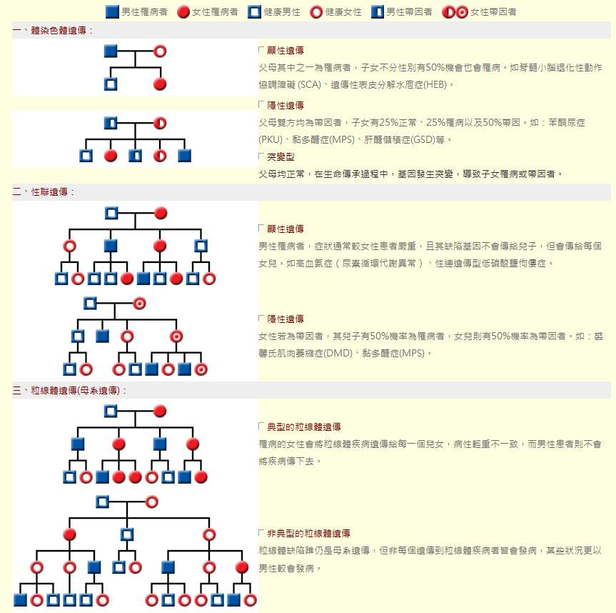 罕病遺傳模式一、體染色體遺傳:<br/>顯性遺傳<br/>父母其中之一為罹病者,子女不分性別有50%機會也會罹病。如脊髓小腦退化性動作協調障礙 (SCA)、遺傳性表皮分解水庖症(HEB)。<br/><br/>隱性遺傳<br/>父母雙方均為帶因者,子女有25%正常、25%罹病以及50%帶因。如:苯酮尿症(PKU)、黏多醣症(MPS)、肝醣儲積症(GSD)等。 <br/><br/>突變型<br/>父母均正常,在生命傳承過程中,基因發生突變,導致子女罹病或帶因者。<br/><br/>二、性聯遺傳:<br/>顯性遺傳<br/>男性罹病者,症狀通常較女性患者嚴重,且其缺陷基因不會傳給兒子,但會傳給每個女兒。如高血氨症(尿素循環代謝異常)、性連遺傳型低磷酸鹽佝僂症。<br/><br/>隱性遺傳<br/>女性若為帶因者,其兒子有50%機率為罹病者,女兒則有50%機率為帶因者。如:裘馨氏肌肉萎縮症(DMD)、黏多醣症(MPS)。<br/><br/>三、粒線體遺傳(母系遺傳):<br/>典型的粒線體遺傳<br/>罹病的女性會將粒線體疾病遺傳給每一個兒女,病性輕重不一致,而男性患者則不會將疾病傳下去。<br/><br/>非典型的粒線體遺傳<br/>粒線體缺陷踓仍是母系遺傳,但非每個遺傳到粒線體疾病者皆會發病,某些狀況更以男性較會發病。<br/>